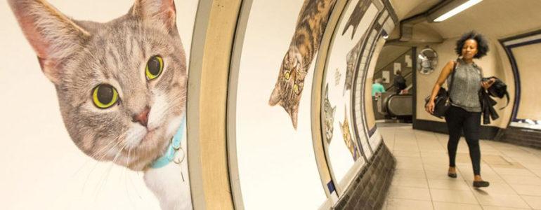 Reklámok helyett macskák lepték el a londoni metrót