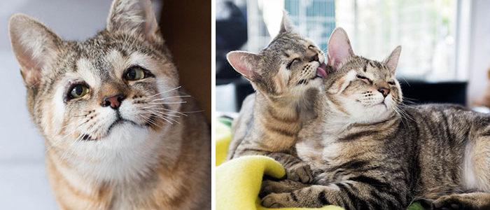 Szemhéj nélkül születtek ezek a cicák, állatbarát megtalálóiknak köszönhetik látásukat