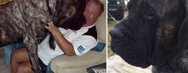 Ölebnek hiszi magát Ausztrália leghatalmasabb kutyusa