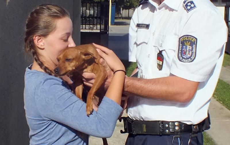 Megtalálták és visszaadták Bambit a tiszakécskei rendőrök
