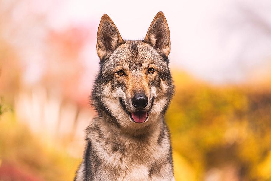 Az emberi szó hangsúlyára és jelentésére kombináltan figyelnek a kutyák