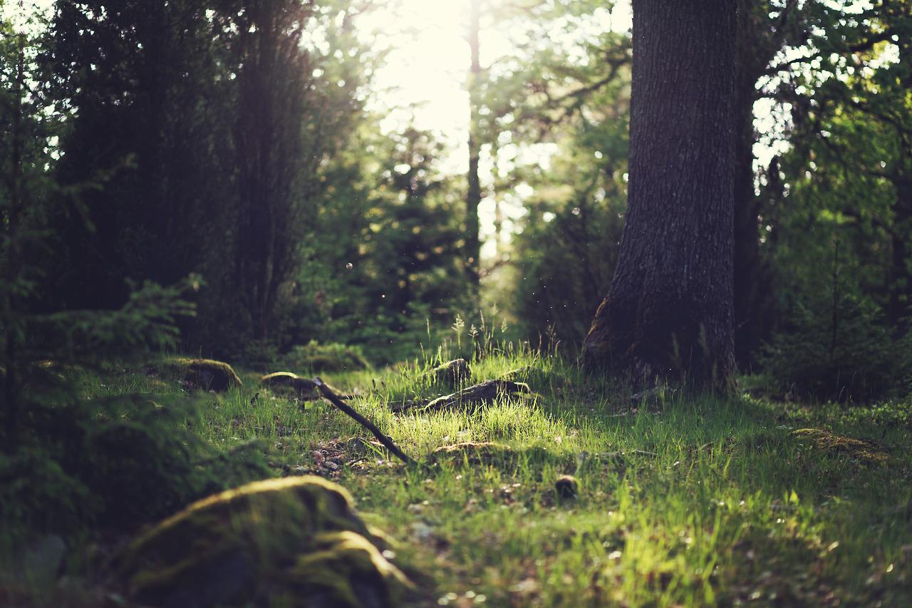 Családi nap az állami erdőgazdaságokkal Budapesten