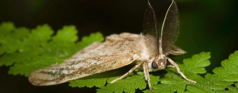Évente több tízmilliárd dollárba kerülnek az emberiségnek az invazív rovarfajok