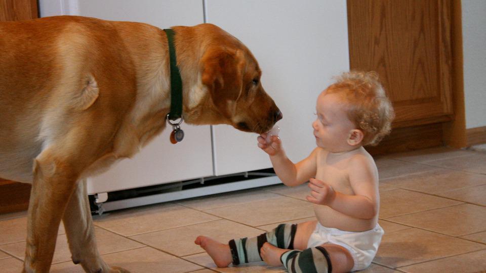 Itt a bizonyíték, hogy a kutyusok a legjobb bébiszitterek