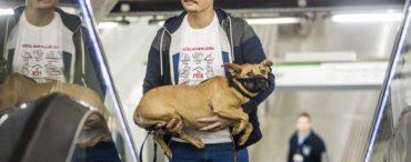 Sajtótájékoztató a kutyák utaztatásáról az egyik metró?