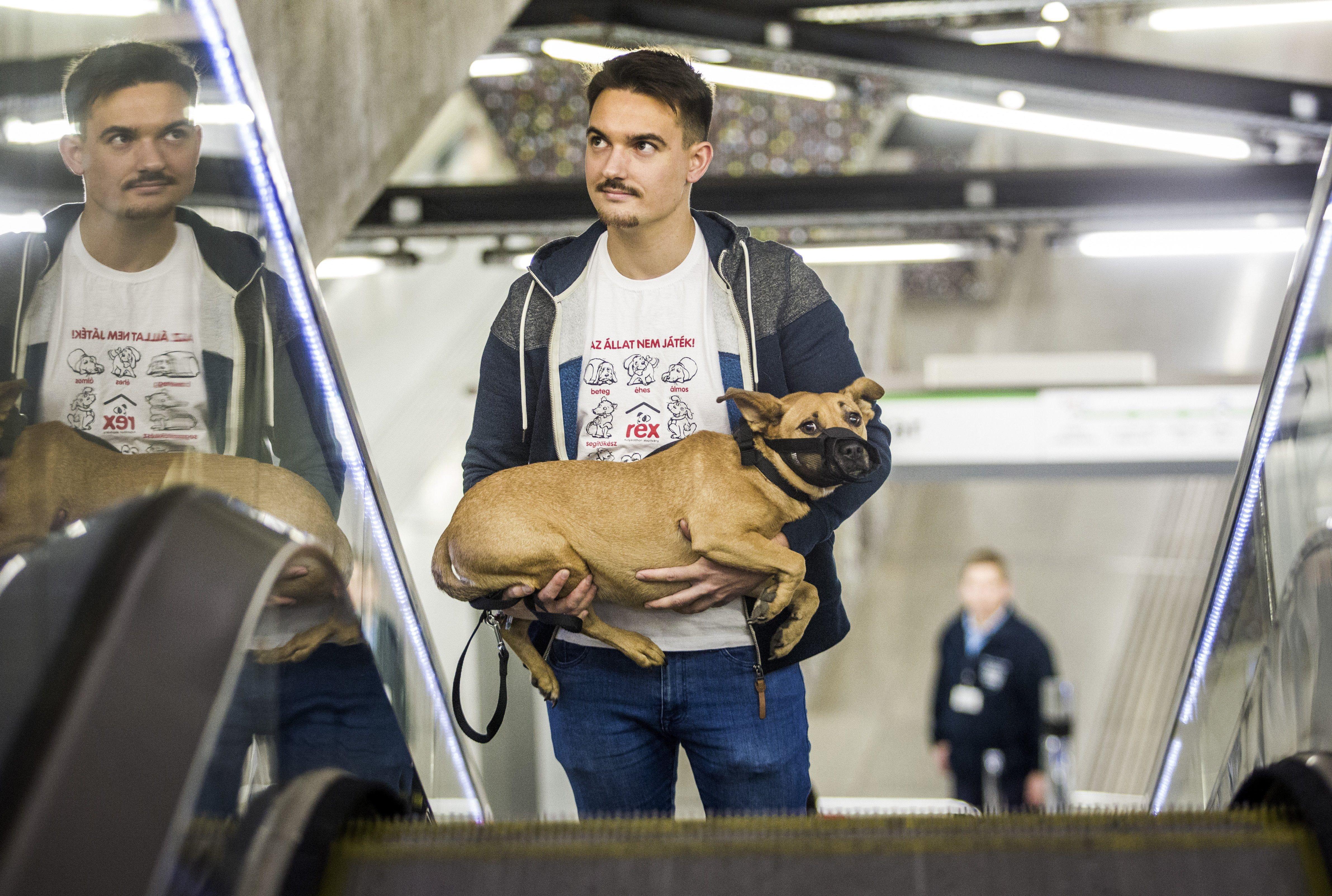 Az állatok biztonságos szállítására figyelmeztettek állatvédők a világnapon
