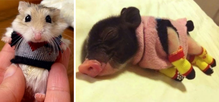 28 imádnivaló állat, aki már a télre készül aprócska pulóverével