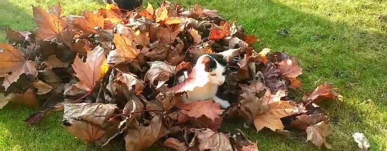 A cicák is imádnak az őszi falevelekben hemperegni… Itt a bizonyíték!