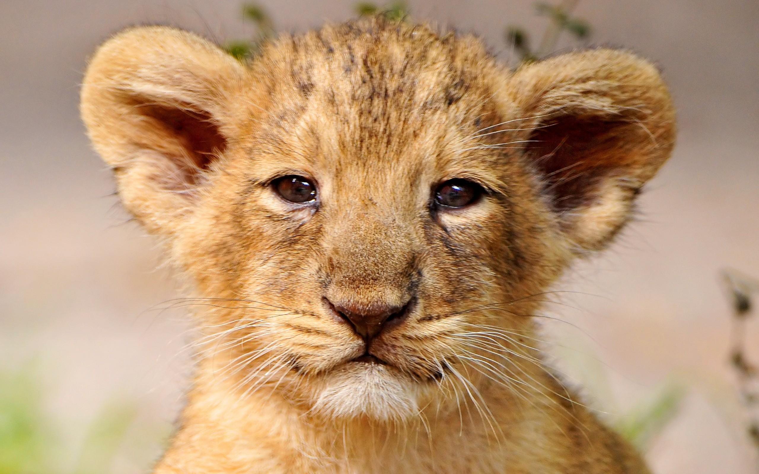 Megdöbbentő és elszomorító tényeket tárt fel egy kutatás a kenyai vadállatokról