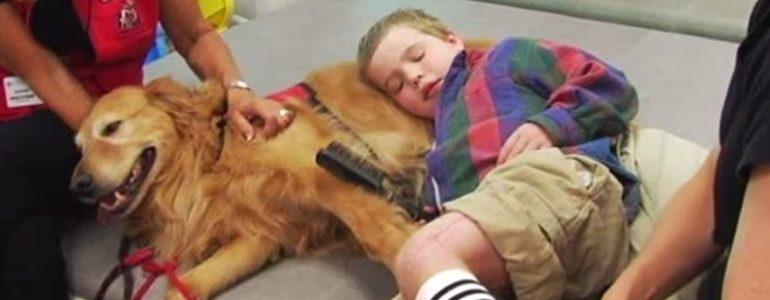 Terápiás kutyus segítette a lebénult kisfiút, hála neki, már járni is képes