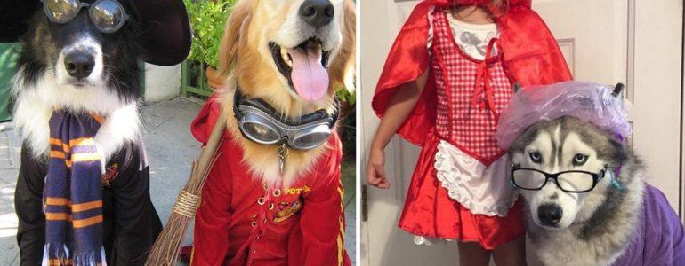 24 izgatott kutyus, aki már alig várja a halloweent
