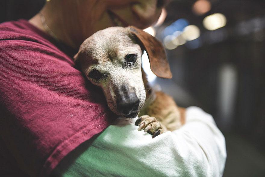 Mindent elveszített a 18 éves vak kutyus, de a menhelyen szeretetre talált