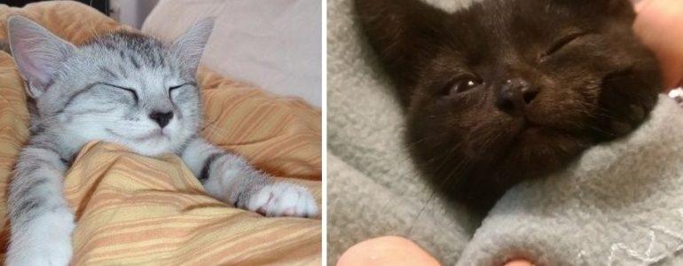 16 édes cica, aki már a lefekvéshez készülődik