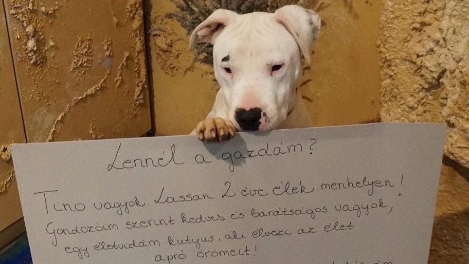 Megható üzenettel keresi gazdáját Tino, a Rex kutyaotthon lakója