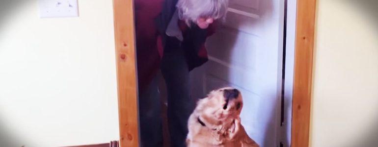 A gazdi csak egy puszit akar… de a kutyus erről másképp vélekedik