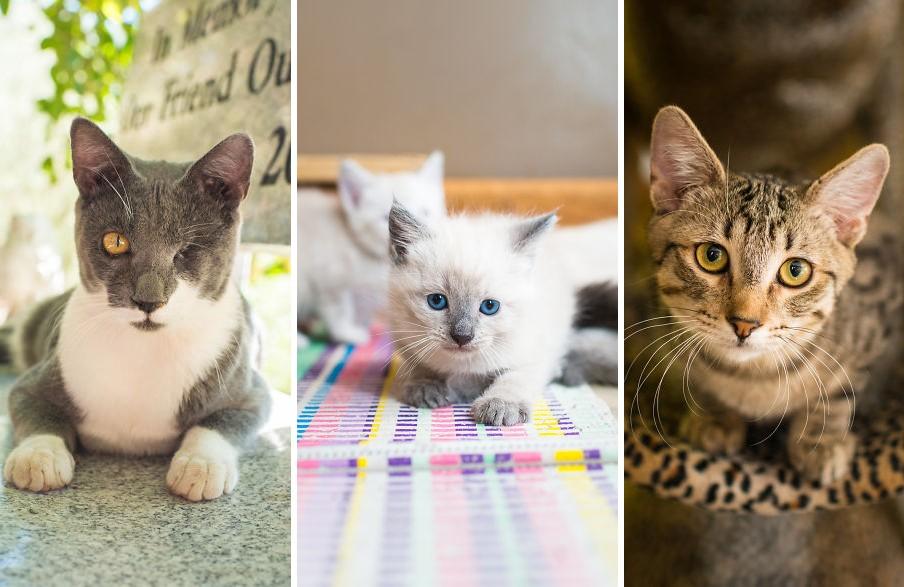 Azonnal örökbe fogadnál egy cicát, ha meglátod ezeket a menhelyi macsekokat!