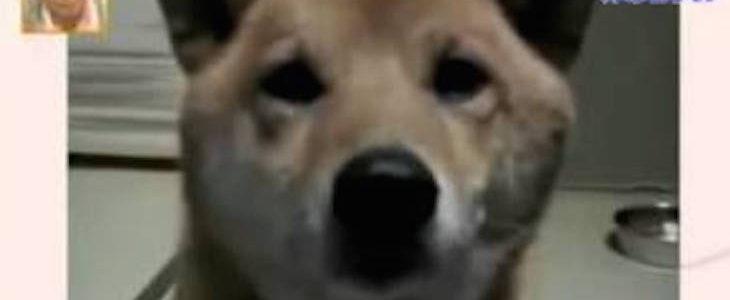 Arra kérte kutyáját a gazdi, hogy halkabban ugasson… Erre a reakcióra talán még ő sem számított
