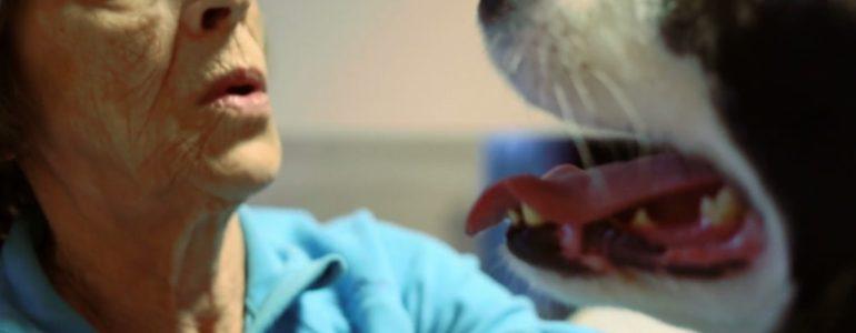 Napfényt visz a magányos idősek életébe Cooper, a terápiás kutya