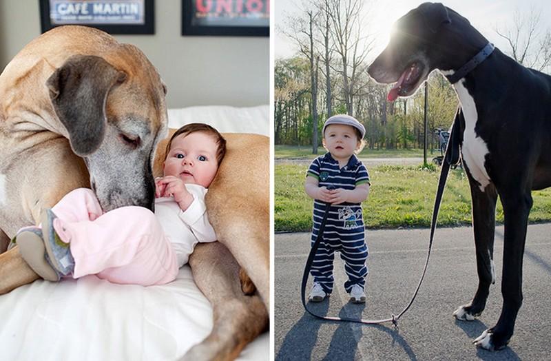 22 csupa szív kutyaóriás apró barátjával