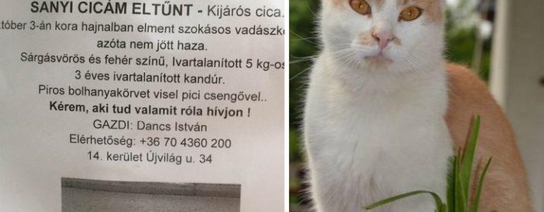 12 nap után megkerült Sanyi, a macska