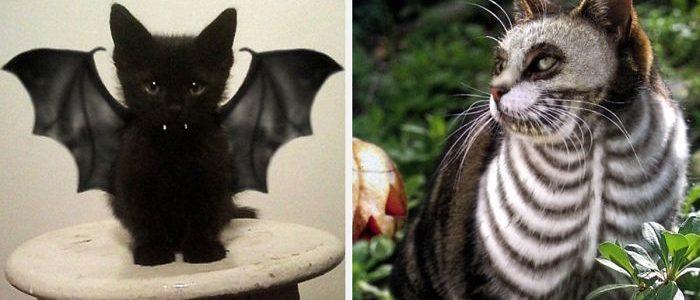26 cica, aki már nagyon készül a halloweenre