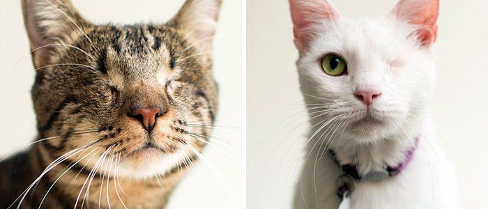Nekik is jár az esély a boldogságra – Vak cicákról készít képeket ez a fotós