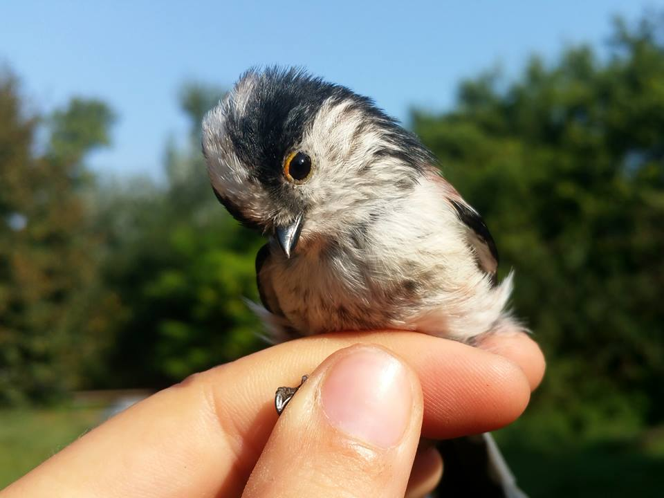Harmincéves a fenékpusztai madárgyűrűző és madármentő állomás