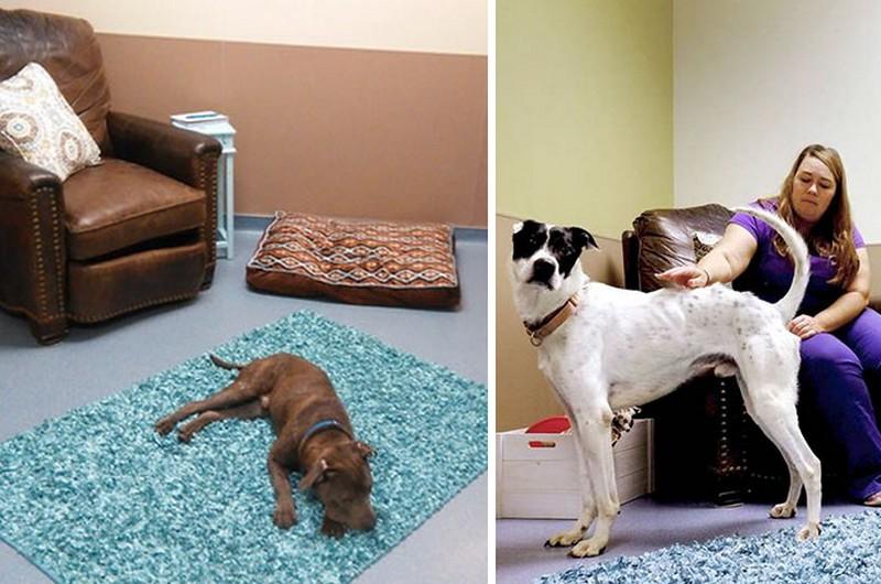 Egy egész nappalit rendeztek be a menhelyen, hogy a kutyusok otthon érezzék magukat
