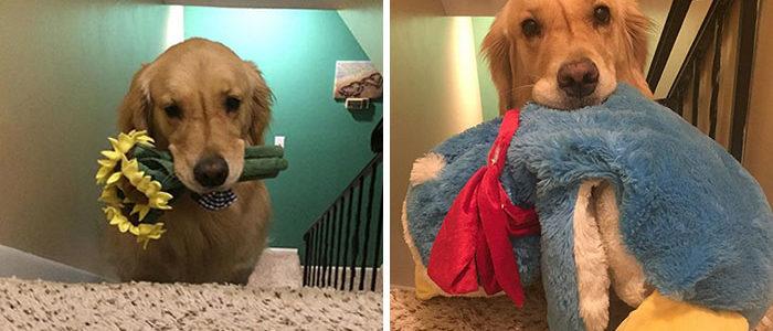 Minden éjjel más játékkal alszik a terápiás kutyus