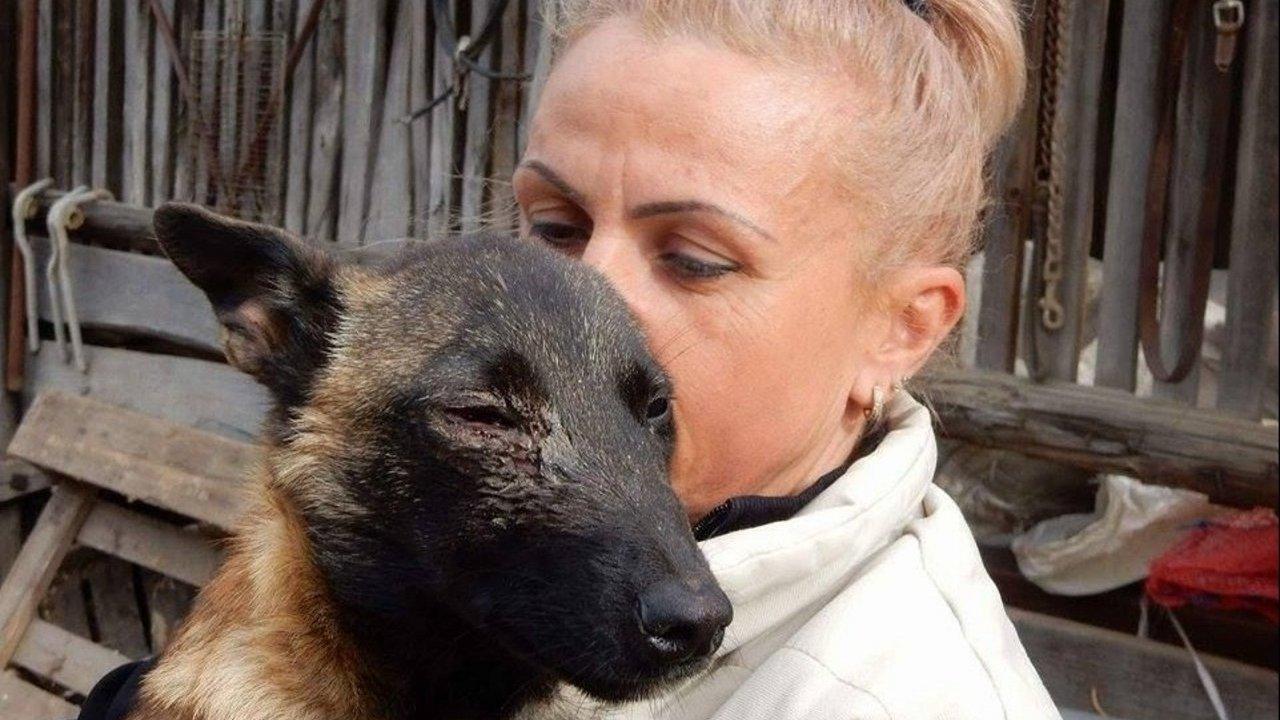 Kölyökkutya szemét szúrták ki Kiszomboron