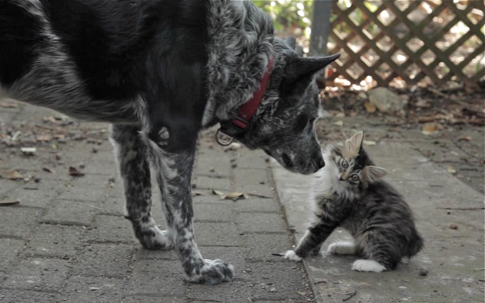 Kutya lett a sérült kiscica legjobb barátja