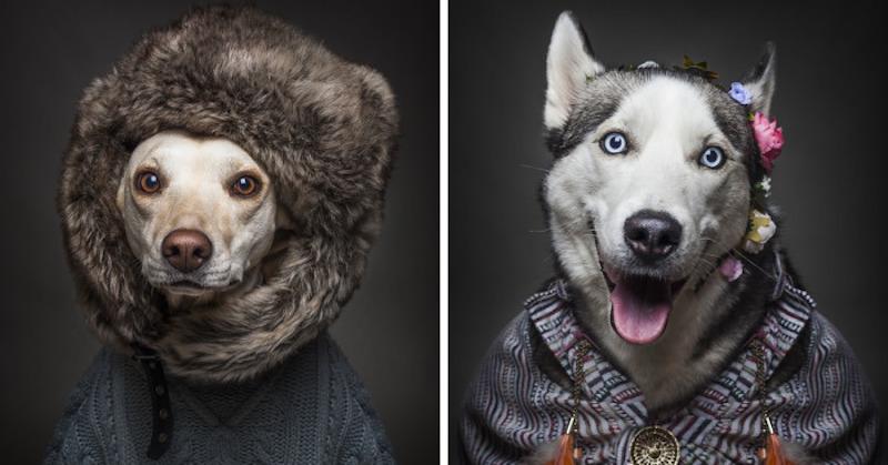 Hogy festenének a kutyák emberként? Ez a fotósorozat elárulja!