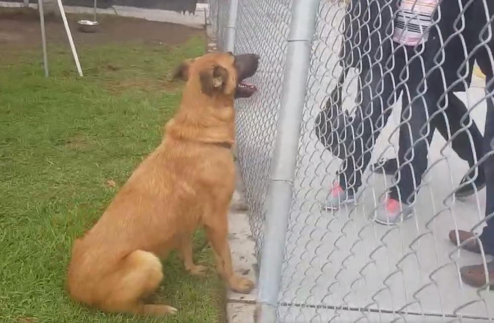 Boldogan üdvözölte régi családját a menhelyi kutyus, de gazdái nem érte jöttek