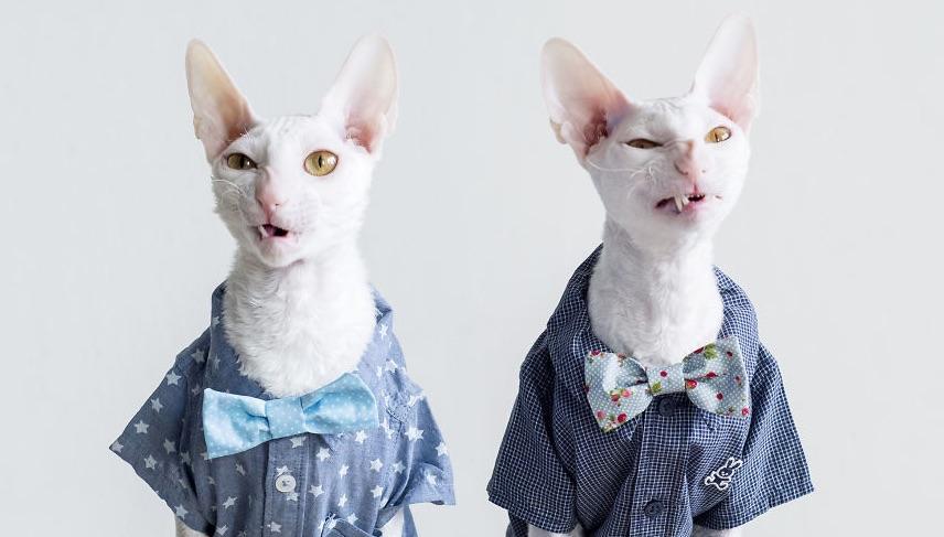Ismerd meg a világ legkülönösebb cicáit, akik igazi bajkeverők!