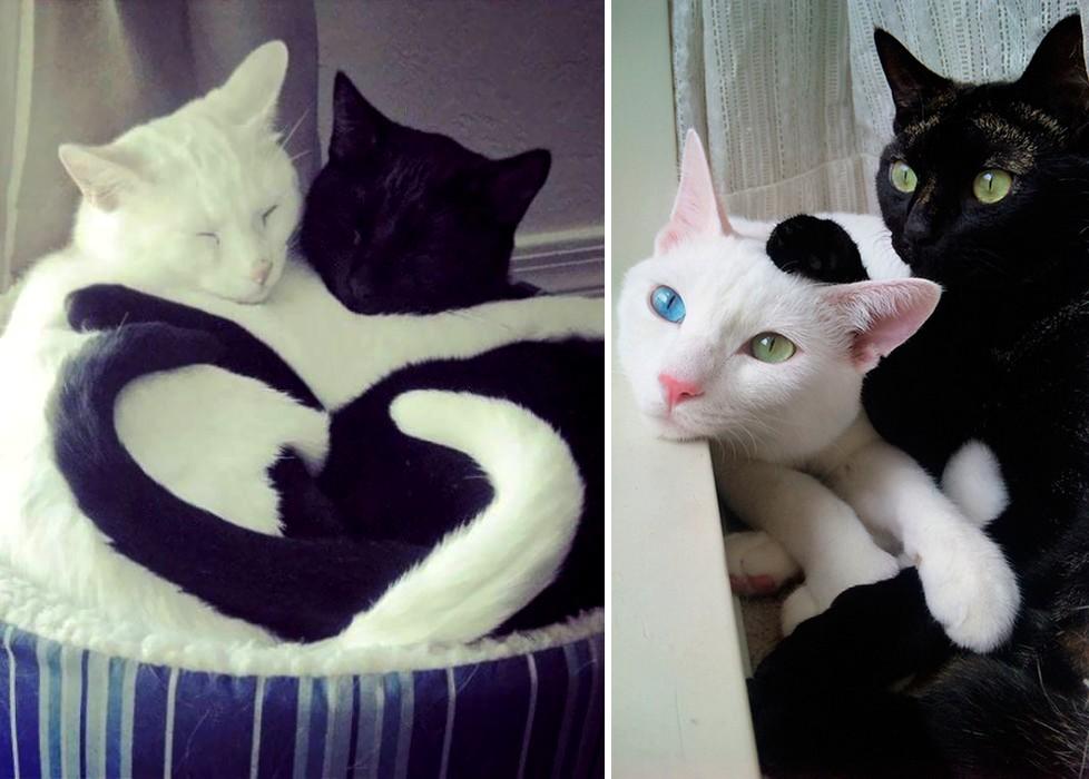 Különböznek, mégis kiegészítik egymást a fekete és fehér macskák
