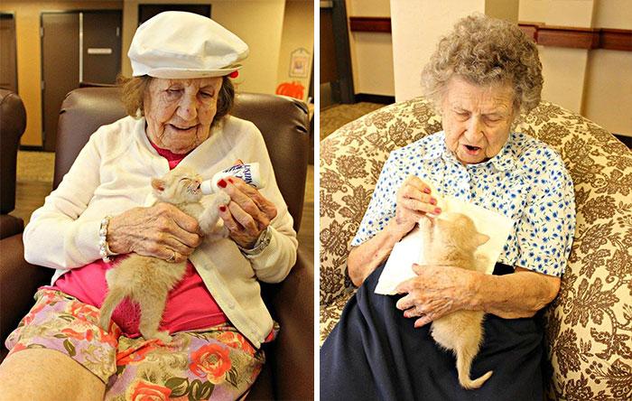 Egy nyugdíjasotthon lakói segítenek az árva kiscicákon