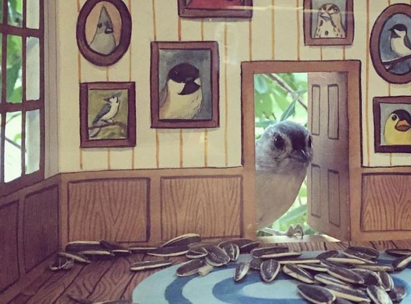 Tündéri, berendezett etetőket készít a madaraknak egy nő