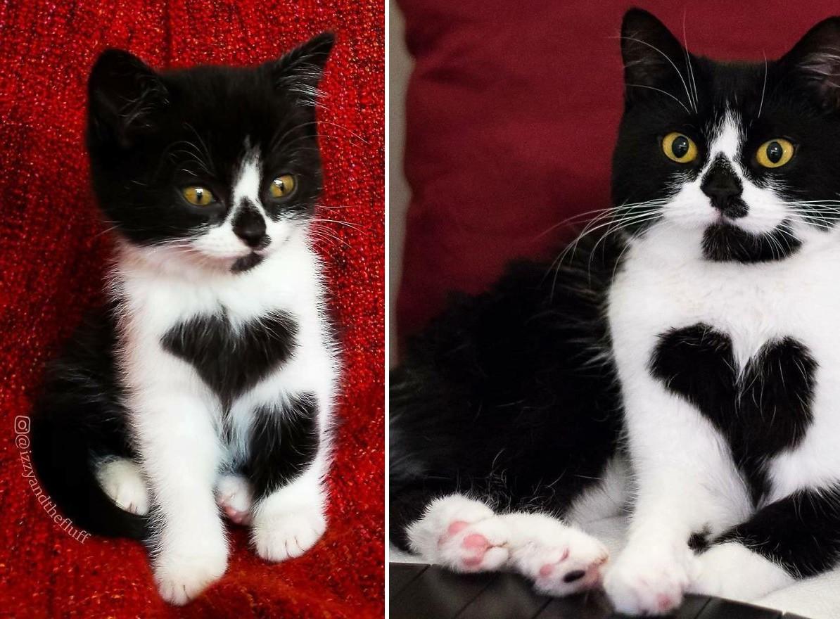 Szívalakú foltjával ő itt az internet egyik legcukibb cicája