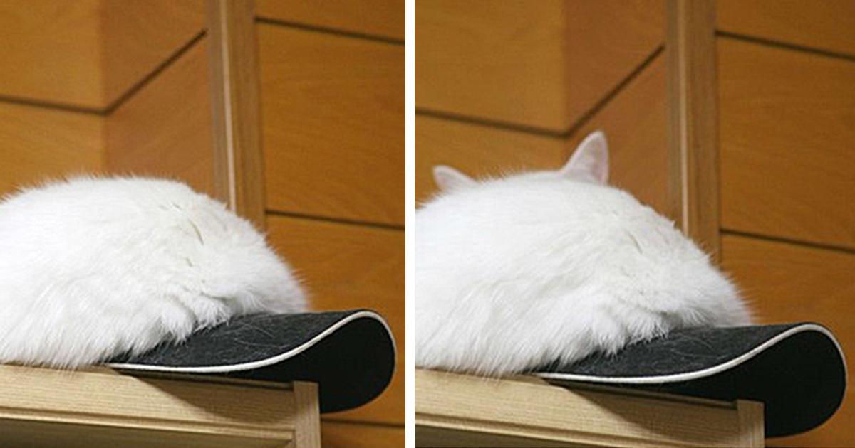 25 macska, aki képes láthatatlanná válni