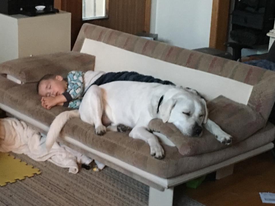 Imádnivaló kutyus őrzi az autista kisfiú álmait