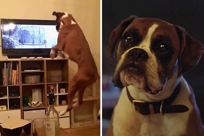 Így reagált a kutyus az idei év kedvenc karácsonyi reklámjára