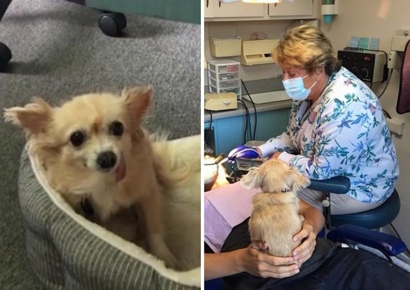 Idős terápiás kutya nyugtatja a fogorvostól félő betegeket