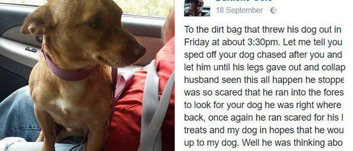 Levelet írt az állatmentő a férfinak, aki az orra előtt dobta ki a kutyáját a kocsiból