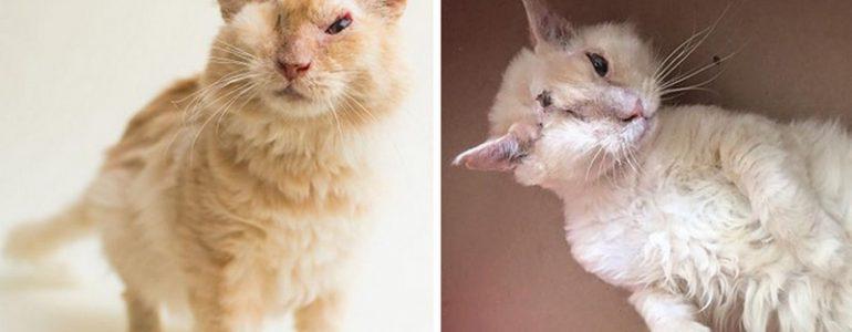 Savval öntötték le a cicát, mégis bízik még az emberekben