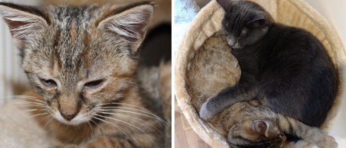 A család macskája fogadta örökbe az árván maradt, beteg kiscicát