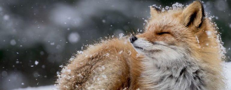 Lélegzetelállítóak a National Geographic díjának idei döntős fotói