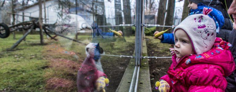 35 teherautónyi ajándékot gyűjtött össze a Nyíregyházi Állatpark