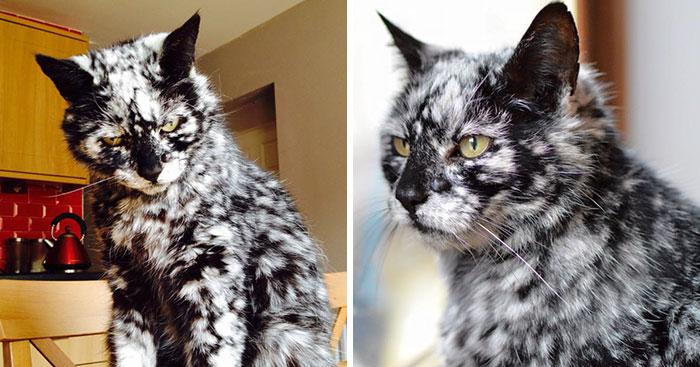 Egy ritka betegségnek köszönheti különleges bundáját ez a 19 éves cica