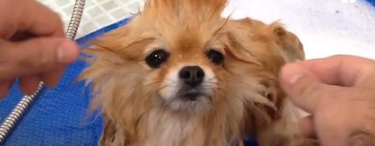 Ennek a kutyakozmetikusnak van a világon a legjobb munkája