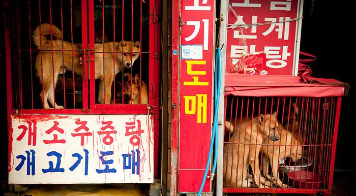 Betiltották a kutyahús-árusítást Dél-Korea egyik legnagyobb piacán